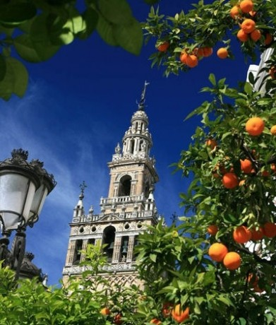 School trip to Seville - Giralda & Orange trees